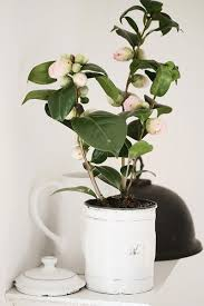 beautiful house plants diy houseplants this is cooler than it sounds i promise