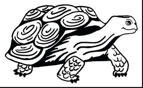 coloring pages turtle coloring sea turtle coloring pages