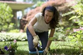Gardening Tips For Summer - some useful tips to take care of your lawn in summer my greenery