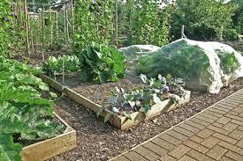 amazing vegetable raised garden bed raised vegetable garden bed