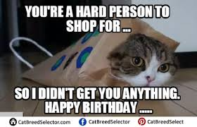 happy birthday cat memes cat breed selector