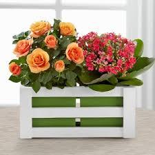 flowers for him glendale birthday flowers for him at glendaleflowers info