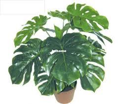 winsome indoor decorative plants 35 indoor decorative plants in