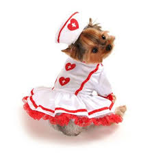Dog Halloween Costumes Girls 1150 Cute Accessories Clothes Pets Images