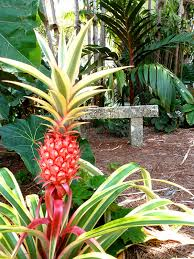Miami Beach Botanical Garden by Support Miami Beach Botanical Gardens