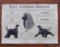 afghan hound vintage afghan hound etsy