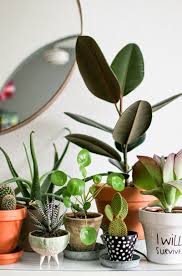 usta giremez ambientação decor pinterest cacti plants and