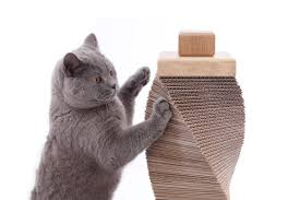 Cool Cat Furniture Best Cat Scratching Posts Cool Stuff For Cats
