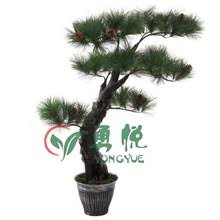 ornamental pine trees ornamental pine trees suppliers and
