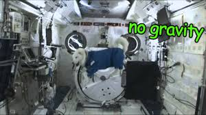 Doge Meme Youtube - space doge doge meme youtube