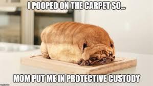 Depressed Pug Meme - sad pug meme pug best of the funny meme