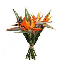 bird of paradise flower flower delivery in india bird of paradise flowers to india