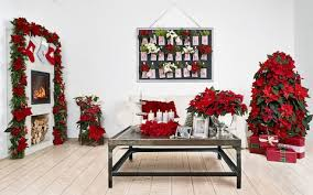inspirational poinsettia arrangements for gardening