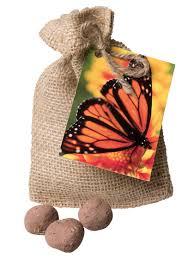 milkweed seeds butterfly garden seed balls for monarch butterflies