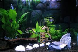 Live Plants In Community Aquariums by The Top 10 Worst