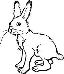 rabbits coloring pages rabbit coloring page free printable coloring pages