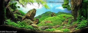 Aquascaping Rocks The Incredible Art Of Underwater Landscaping For Aquariums