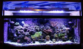 led reef lighting reviews diy led reef tank light