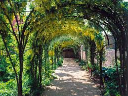 choosing plants for arches and pergolas hgtv