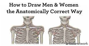 How To Draw Female Anatomy Free Art Lesson How To Study Human Anatomy For The Artist