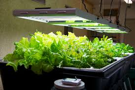 Plants Indoors by Fluorescent Lights Fluorescent Lights For Plants Are Regular