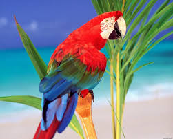 Colors Tropical Colors Parrot Wallpapers In Jpg Format For Free Download