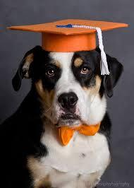 dog graduation cap and gown dog trainer s set of 3 graduation caps