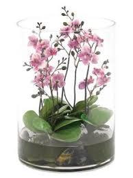 plant terrarium and enclosed wardian case terrarium cases