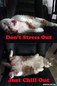 Stressed Out Memes - know it all joe s friday chill meme know it all joe