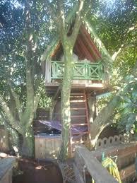 chambre dans les arbres chambre et dans les arbres photo de tendacayou ecolodge