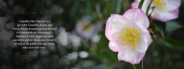 native plant nursery sunshine coast camellia glen nursery u2013 keep up to date with se queensland
