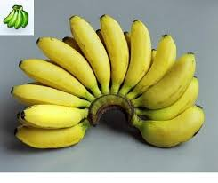 mini banana tree musa misi luki lady finger banana tree halloween pinterest