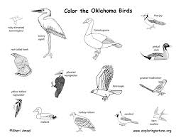 Oklahoma birds images Oklahoma habitats mammals birds amphibians reptiles jpg