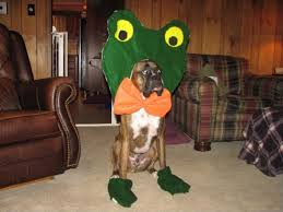 Boxer Puppy Halloween Costumes Halloween Dog Costume Boxer Water Sky Favorite Animals