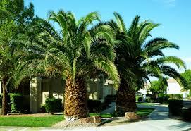 Home Design Ideas Videos by Palm Trees Descriptions Photos Advices Videos Home Design