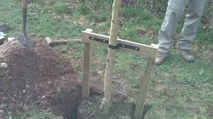 tree stakes how to stake a large tree