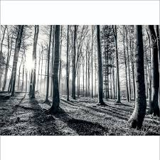 1wall black and white forest trees mural wallpaper 366cm x 232cm 1wall black and white forest trees mural wallpaper 366cm x 253cm