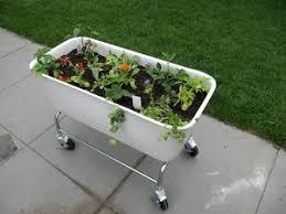 Urban Garden Denver - 9 best urban gardening images on pinterest urban gardening