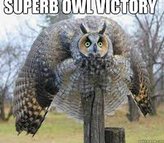 Superb Owl Meme - battle owl memes quickmeme