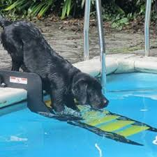 pool ramps for large dogs dog n treats
