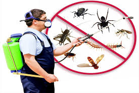 green secure pest control