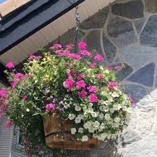 ideas for self watering hanging baskets plant booster