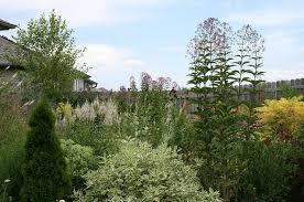 shade loving native plants t h e d e e p m i d d l e june 2011