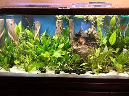 Tropical Aquatic Plants - sharkey u0027s aquarium tropical fish u0026 supplies home facebook