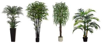 1 niagara falls plants trees decor rentals topiary boxwood