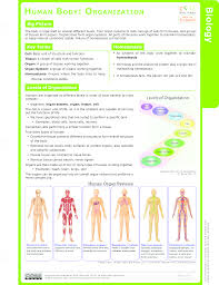 human body ck 12 foundation