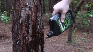 hog hunting lights for feeder pig oil hog attractant kill light feeder set up youtube