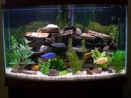 fish tank ornaments ideas fish tank decoration ideas for