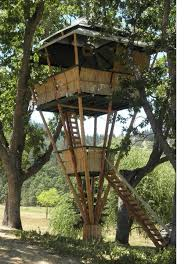 Cool Tree Houses Best 25 Tree House Accommodation Ideas On Pinterest Luxury