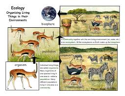 what is ecology a descripiton and illustrated poster